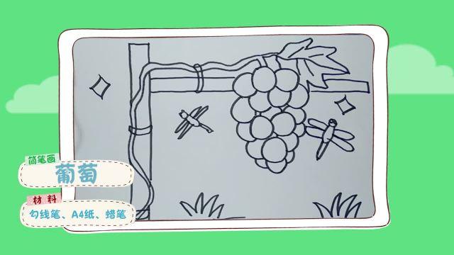 简笔画葡萄 简单好学