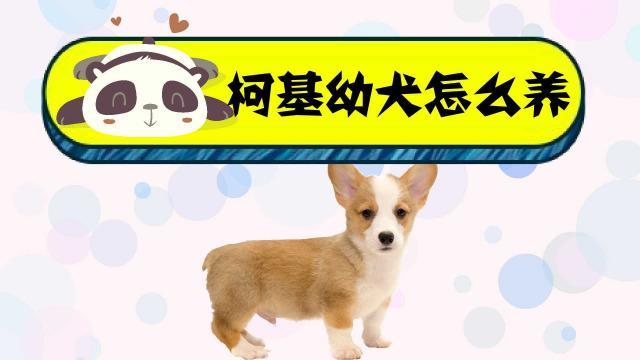 泰迪狗叫什么名字好_生活中常见的八个狗狗品种(小体型犬)-百度经验